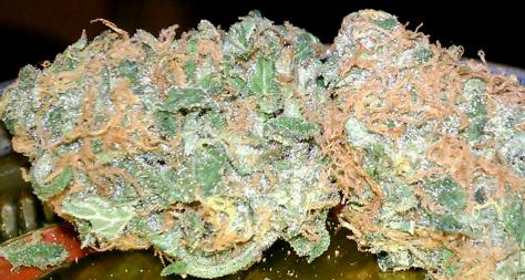 Querkle Weed (picture)
