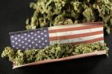 american_weed