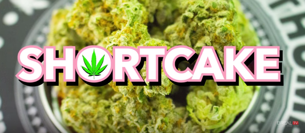 "Dr. Greenthumb Strain Review ""Shortcake""  BREALTV"